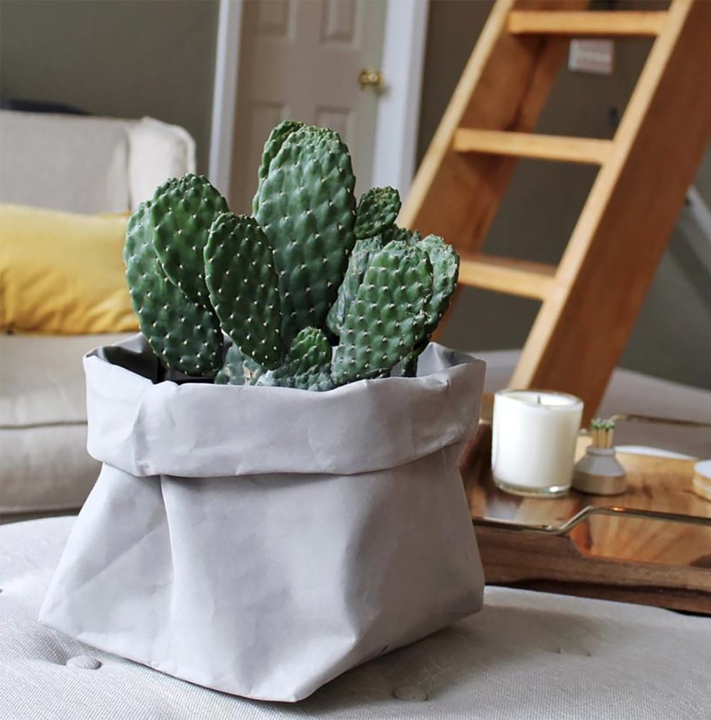 Urbana_Sacs_Washable_Paper_Bags_Organizer_Planter_Cactus_Stone_Large_N_S_600x @ 2x