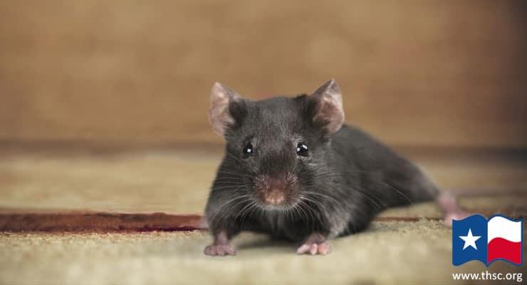 staring-back-at-ya-mouse