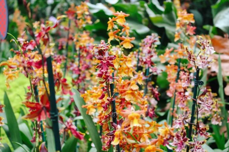 atlanta-botanical-garden-11a
