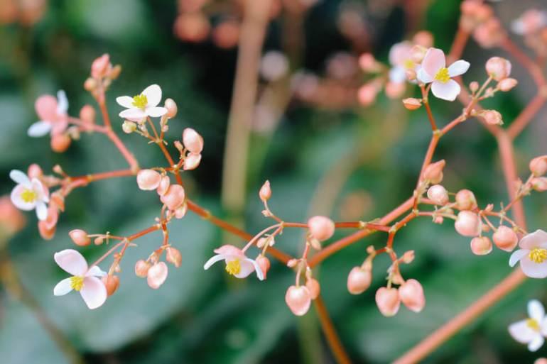 atlanta-botanical-garden-17a