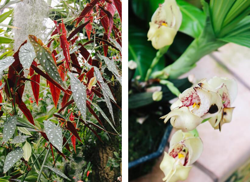 atlanta-botanical-garden-21a