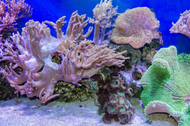 tropical-sea-underwater-with-corals