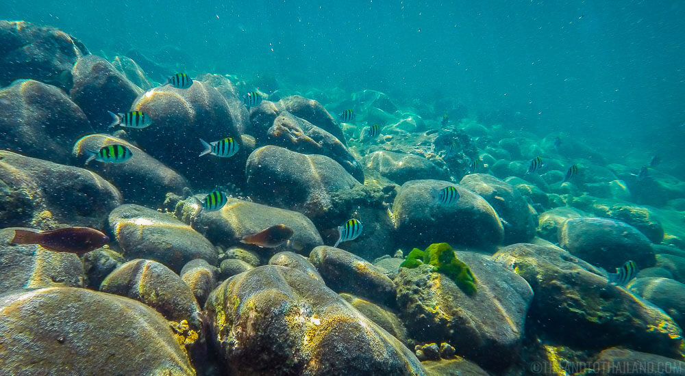 Schools of X fish while snorkleling at Koh Rok, Thailand in the Andaman Sea