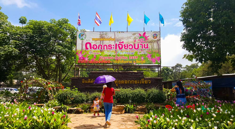Siam Tulip Festival: Dok Krachiao Baan