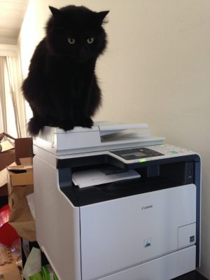 弗里兹 perched on the printer