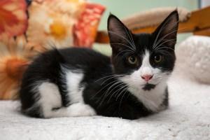 Kitten_Olfen_9456