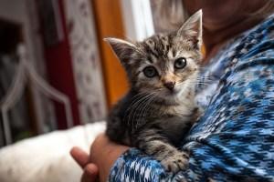 Kitten_Olfen_9521