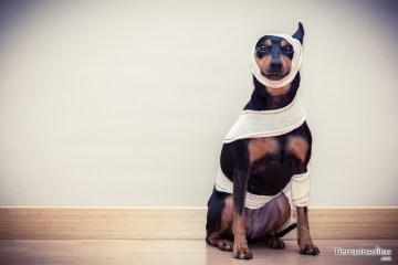 seguro de viaje para mascotas