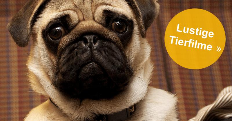Lustige Tierfilme: Wundervolle und herzige Tierfilme, die du unbedingt sehen solltest