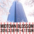 midtown blossom 2016