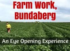 farm work bundaberg 88 days