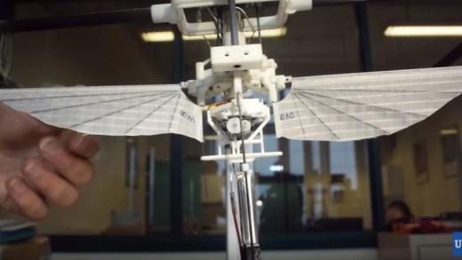 Drone – Des belges inventent un colibri robotisé