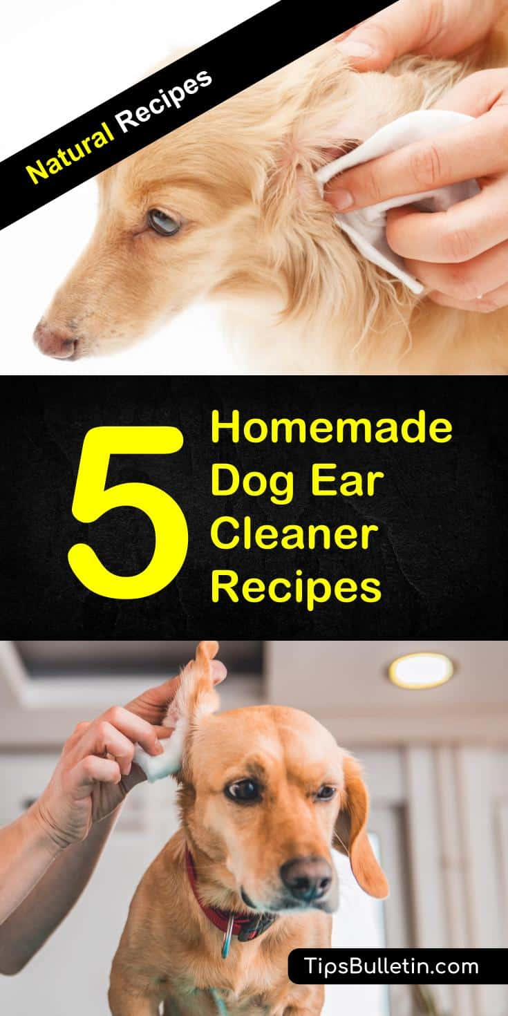 Fullsize Of Homemade Dog Ear Cleaner