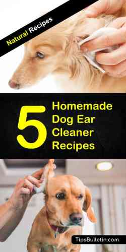 Small Of Homemade Dog Ear Cleaner