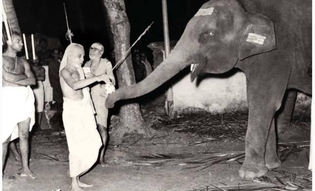 Kanchi Paramacharya With The Temple Elephant
