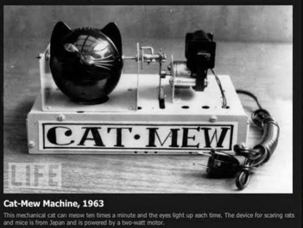 Cat Mew- per spaventare topi e ratti (LOL)