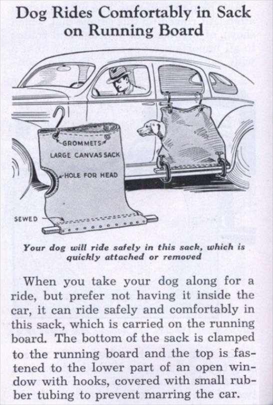 Trasporta Cani