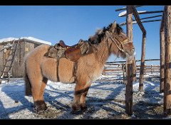 Yukat horse