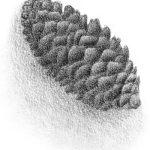 Simplified Texture Technique