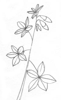 Wild Flower Line Drawing