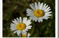floress.jpg
