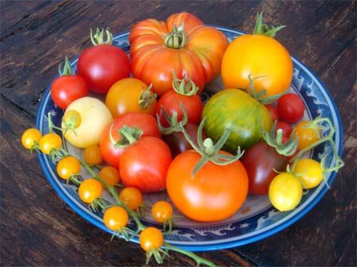 ernten ernten ernten ist angesagt tomaten. Black Bedroom Furniture Sets. Home Design Ideas