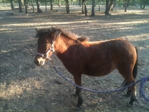 www.Cowboy4Sale.com, texas, horses, horse, for sale, country, stud, mare, breeding, bred, easy, jet, cash, dash, safe, longhorns, sorrel, buckskin, washington, kids, beginner, advanced, show, pleasure, trail, riding, cowboy, cowgirl, freckles, playboy