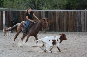 Sly - 5 year old red roan (140)