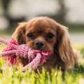 Best Pet Shops Gold Coast