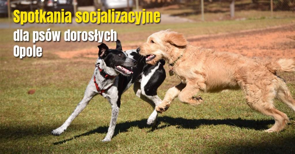 spotkania-socjalizacyjne