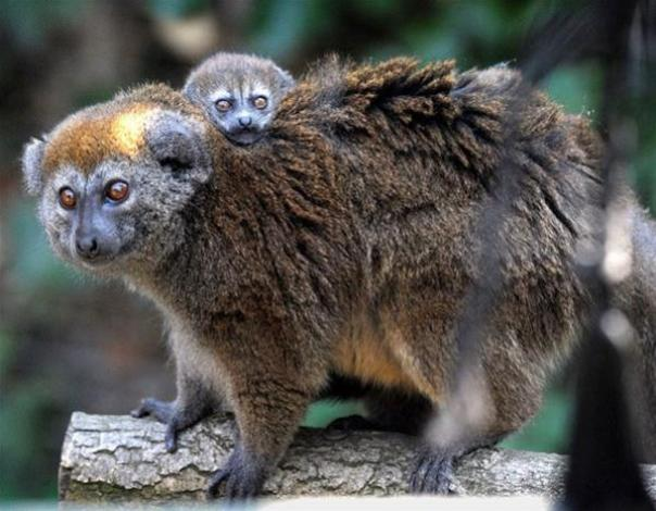Top 10 Baby Animals From Zoos of the World10