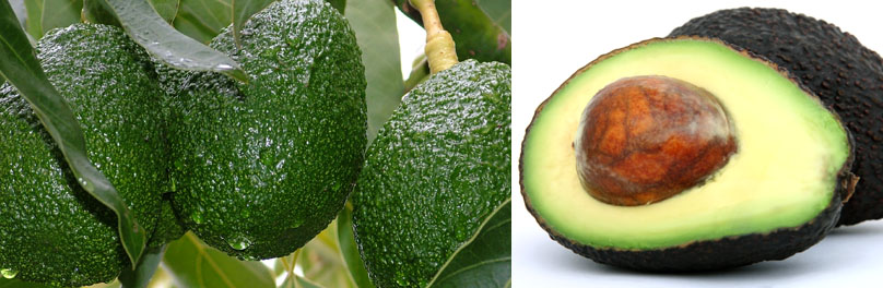 which is best anti aging foods