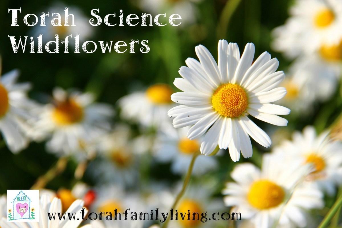 Torah science - wildflowers