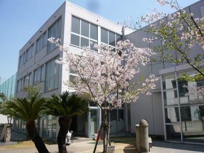 桜とソテツ