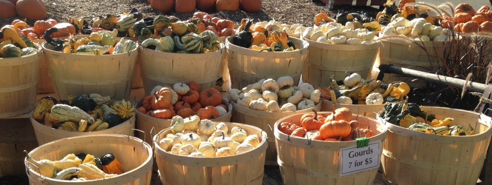 Fall at Springridge Farm