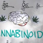 Your Brain on Marijuana: VIDEO