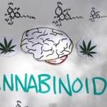 Your Brain on Marijuana: VIDEO
