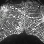 Video: A Fish Brain At Work