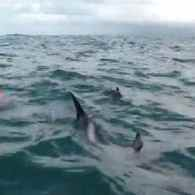 British Distance Swimmer Protected From Shark By Pod of Dolphins – VIDEO