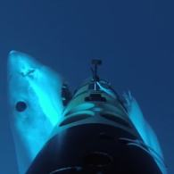 Underwater Camera Films Dramatic Great White Shark Attack in HD: VIDEO