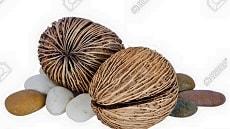 Pong Seeds