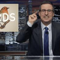 john oliver birds