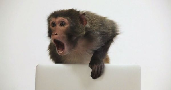 Mad_Monkey_Maintenance_2