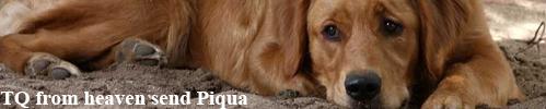 Banner-Piqua