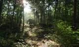 11. Early morning haze, watermarked