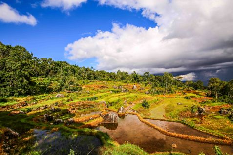 Rice padis in the tropical sun in Toraja