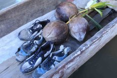 Coconuts and trainers