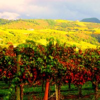 Wine Country Treasures: Travel to Napa Valley
