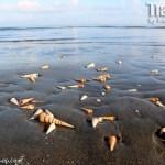 Baybay Beach & Grand Gazebo in Capiz