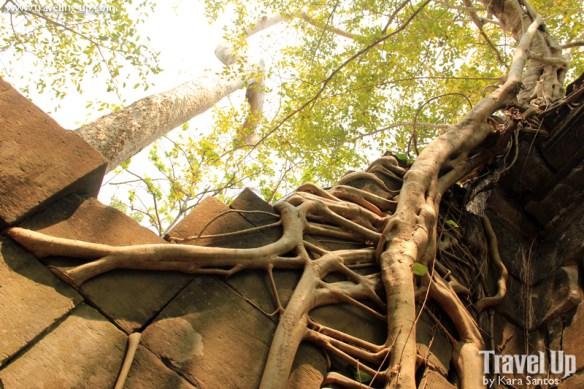 beng melea temple cambodia tree roots